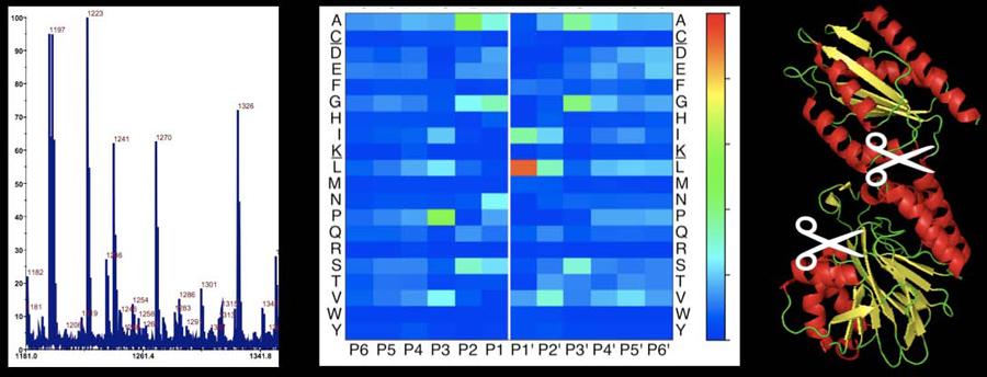 Molekulare medizin forschungsgruppe o schilling
